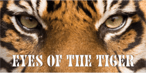 Image: Eye of the Tiger Rear Window Graphic